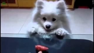Очень смешные видео про собак