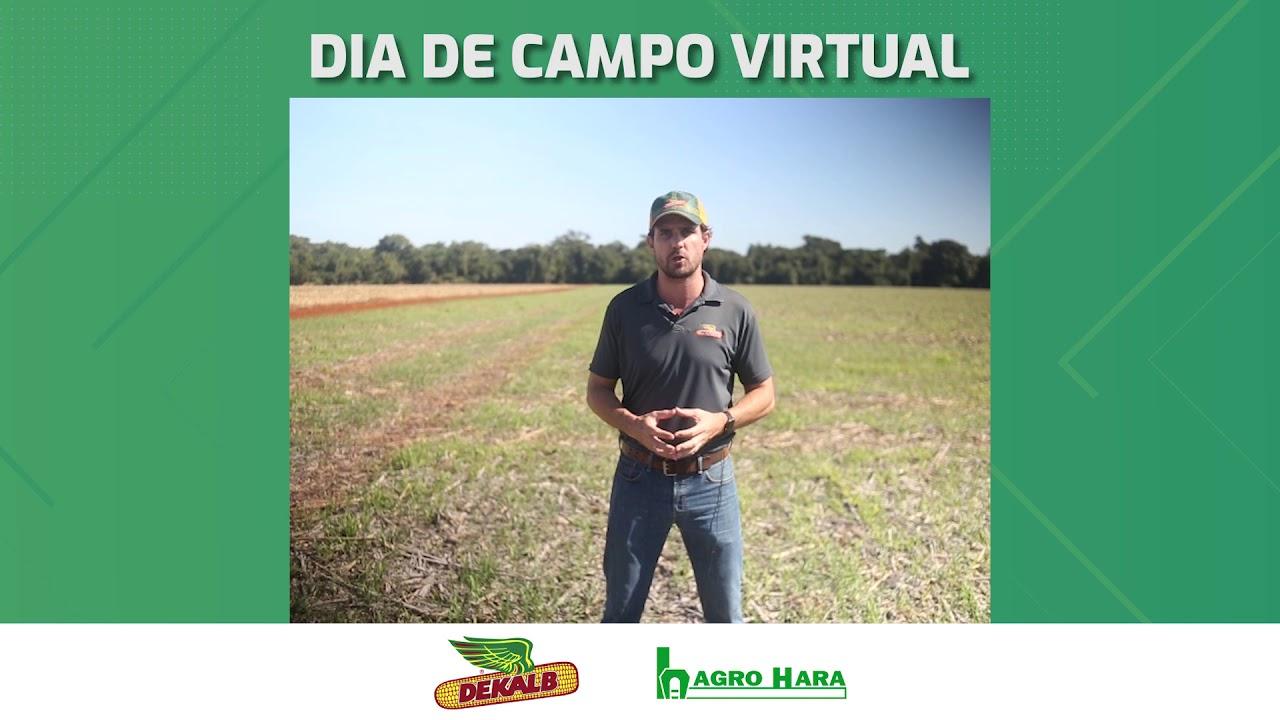 DIA DE CAMPO VIRTUAL | DKB 230PRO3