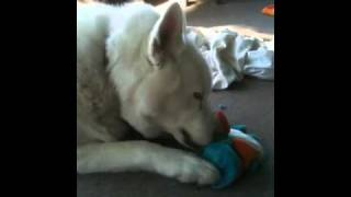 How To Get The Toy Out Of A Stuffed Animal, By Smoki