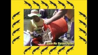 Show Me Shrimp Farms in Dixon, Missouri