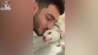 These Scared Cats Would Be The Funniest Thing You Ever Watched