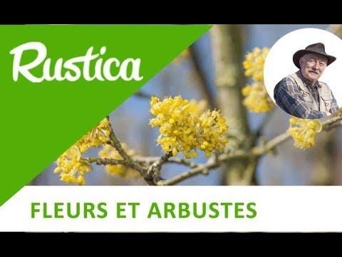 5 arbustes floraison hivernale planter au printemps youtube. Black Bedroom Furniture Sets. Home Design Ideas