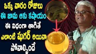 ఒక్క వారం రోజులు ఈ జామ ఆకు కషాయం ఈ విధంగా తాగితే ఎలాంటి షుగర్ అయినా పోవాల్సిందే !   Khadar Vali Diet
