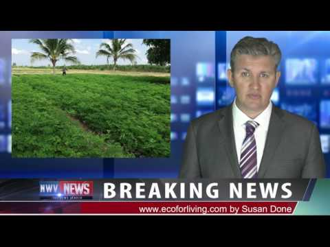 Moringa Breaking News