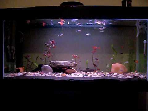 Moj akvarijum 190 L