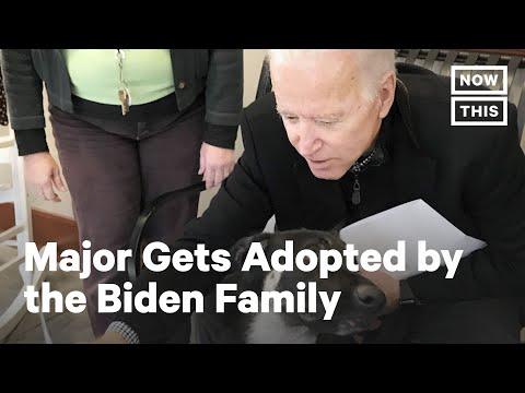 Meet Joe Biden's Rescue Pup Major   NowThis x The Dodo