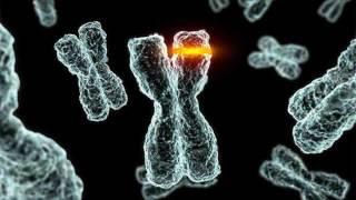 Мутации как двигатель эволюции. Рассказывает биолог Исаак Рашаль