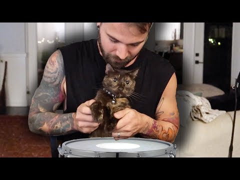 this cat can play the drums!