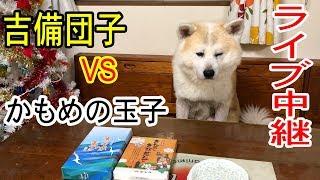 吉備団子・かもめの玉子、秋田犬.惣右介君の どちらが美味しいか! 結果...