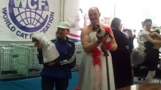 Выступление наших девчонок из Сыктывкара на выстывке кошек в Кирове, Киров вне конкуренции