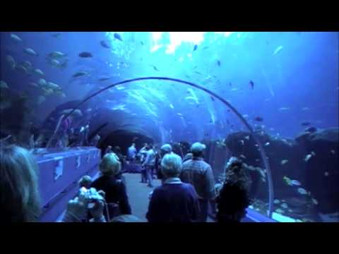 A Georgia Aquarium Tour