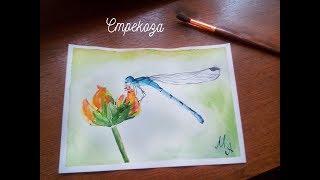 Стрекоза акварелью / Dragonfly watercolor