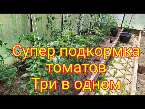 Супер подкормка томатов/завязь, профилактика фитофторы, налив плодов