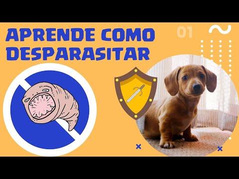 Como desparasitar un perro en tu casa explicacion paso a paso youtube - Como banar a un perro ...