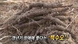 [노컷TV] 농촌진흥청, '가짜 백수오'…