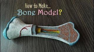 How to make Bone Model
