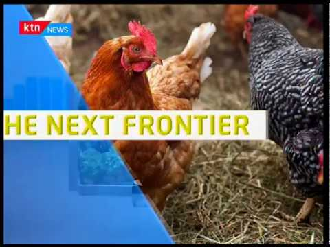 Next Frontier: Cost of animal feed