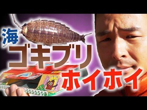 【10連】ゴキブリホイホイでフナムシはホイホイできるのか【世紀の大実験】
