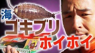 【10連】ゴキブリホイホイでフナムシはホイホイできるのか【世紀の大実験】 thumbnail