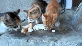 Koty w gospodarstwie.