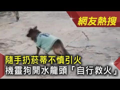 隨手扔菸蒂不慎引火 機靈狗開水龍頭「自行救火」|TVBS新聞 |網友熱搜