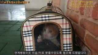 [따뜻한엄마고양이협회][120th]괴사된 발로 구조된 …