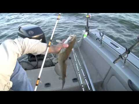 Team Catfish Video - How To Tips On Fishing Channel Catfish In Lakes. 1