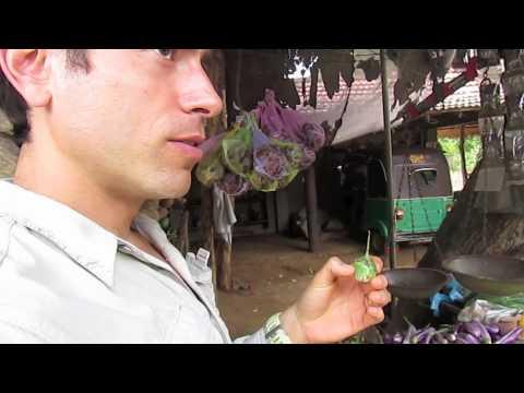 The Fruitarian in Sri Lanka