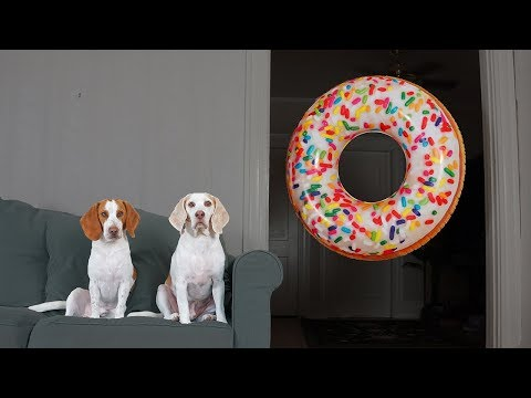 Dogs vs Giant Donut Prank: Funny Dogs Maymo, Potpie & Penny