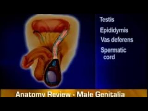 Bates Guide To Physical Examination And History Taking - Masculine Genitalia, Rectum And H