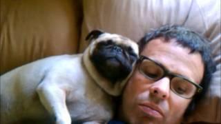 Pugs Snoring In My Face