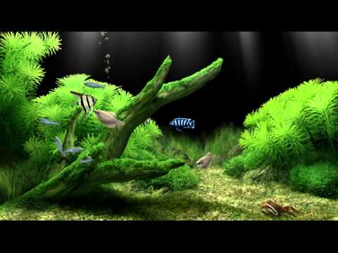 Dream Aquarium Virtual Fishtank #2