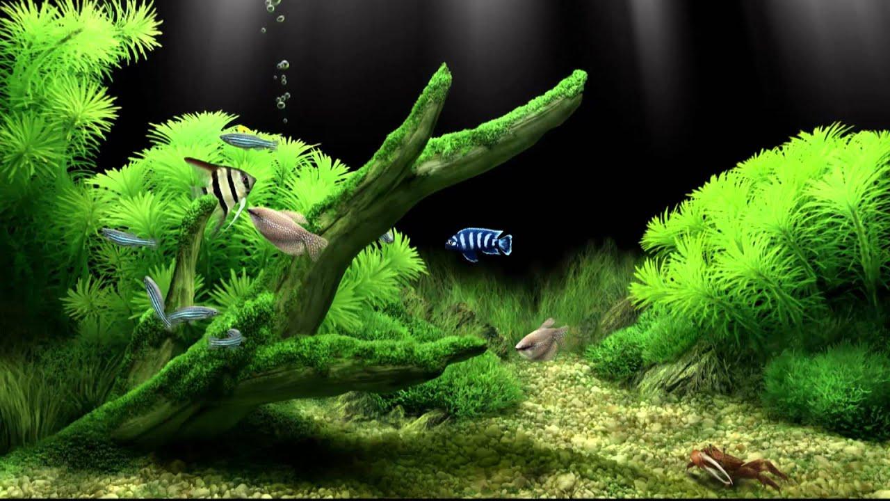 Dream Aquarium Virtual Fishtank #2 - YouTube