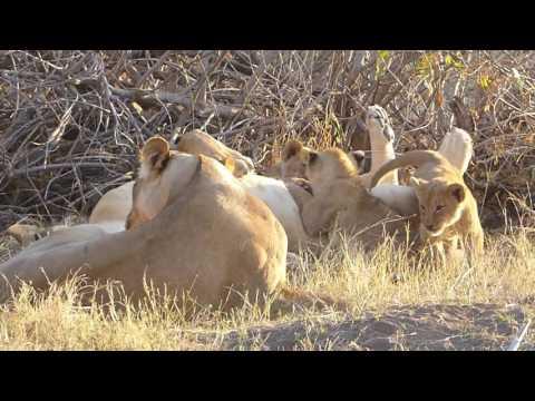 South Africa & Botswana Safari