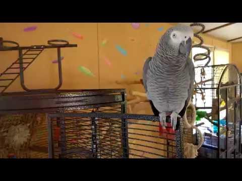 Parrot tour
