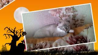 Как мне снится кот 0_о