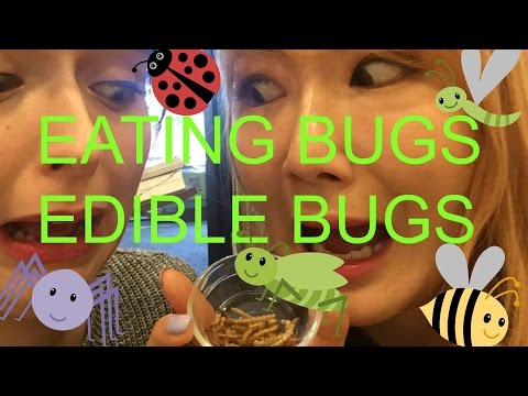 Eating Bugs and Worms | Eating Edible Bugs | Edible Bugs Restaurant in Seoul