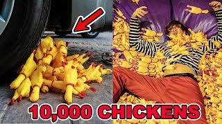 10,000 RUBBER CHICKENS EXPERIMENTS