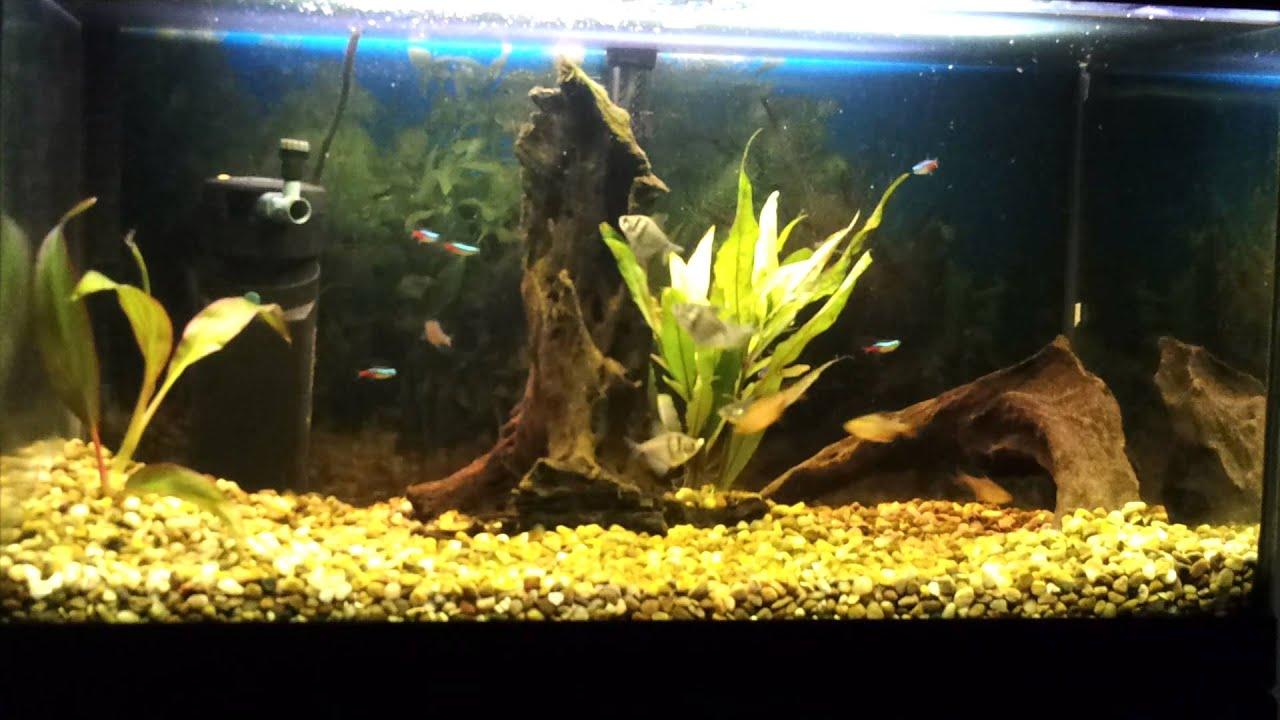 tetra 70l tropical fish tank akwarium aquarium 60l youtube. Black Bedroom Furniture Sets. Home Design Ideas