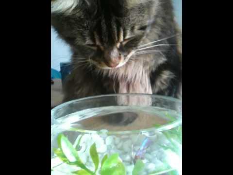 Vito and Milo: Fishing 1