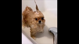 Funny dogs #19