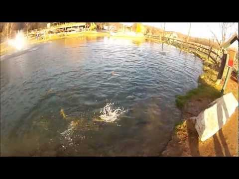 Trout Feeding Freenzy At Smoke Hole Resort In West Virginia.wmv