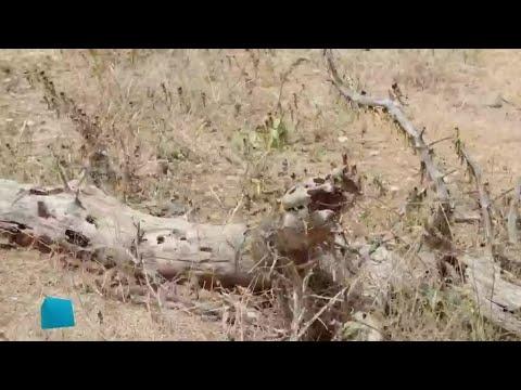 أسراب الجراد تهدد كينيا  - نشر قبل 49 دقيقة