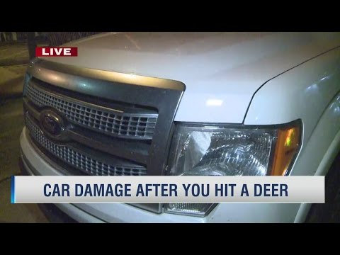 Damage to cars after you hit a deer