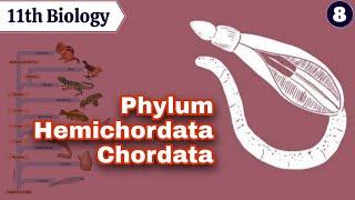   11th Biology   CHAPTER 4   Kingdom Animalia   Lecture-8  