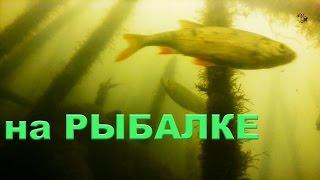На РЫБАЛКЕ. Поплавочная удочка. Насадка- червь. Подводная съемка. Fishing. Поплавок(На РЫБАЛКЕ. Поплавочная удочка.Подводные съемки. Насадка- червь. Прикормка- клубничная. .….((Мой канал- это..., 2016-07-06T06:15:47.000Z)