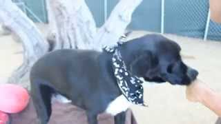 Update-- Adopted!! Jackson-- Border Collie Lab Mix In Los Angeles