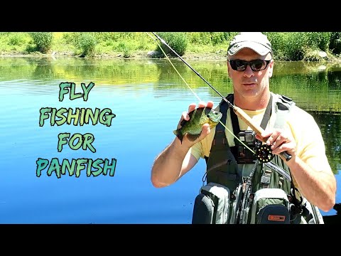 Fly Fishing For Panfish || Wild Water Fly Fishing Combo
