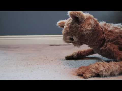 This Cat is NED   EP26 – Home Inspection