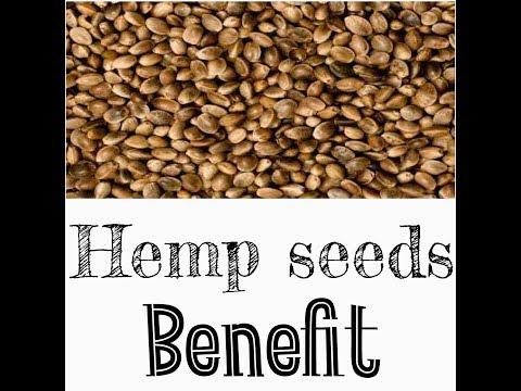 Hemp Seeds Benefits! (In Hindi)